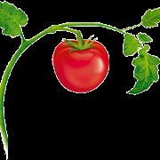 This is the restaurant logo for ETalian