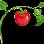 Restaurant logo for ETalian